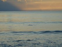 Shark fin during sunrise in Florida royalty free stock photo