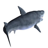 Shark 3d Royalty Free Stock Photography