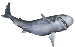 Shark. 3d illustration of the most  dangerous underwater world inhabitant Royalty Free Stock Photography
