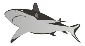 Shark - dangerous sea predator,vector illustration Royalty Free Stock Photo