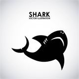 Shark design Stock Photography