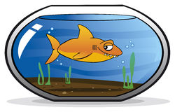 Shark disguised as a goldfish. In an aquarium royalty free illustration