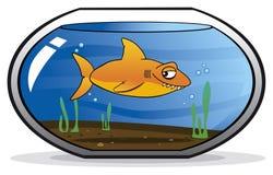 Shark disguised as a goldfish. In an aquarium Stock Photo