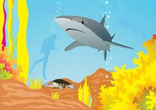 Shark and divers. Underwater landscape. The shark swims in the sea, divers swim away Royalty Free Stock Photo