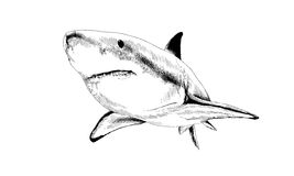 Shark drawn in ink Stock Images