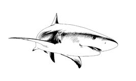 Shark drawn in ink. A shark drawn in ink on a white background Royalty Free Stock Photo