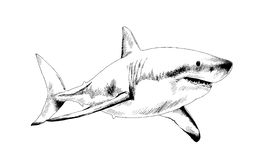 Shark drawn in ink. A shark drawn in ink on a white background Royalty Free Stock Photos