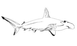 A shark drawn in ink on a white background Stock Photography