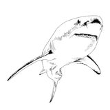 A shark drawn in ink on a white background Royalty Free Stock Photography