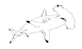 A shark drawn in ink on a white background Royalty Free Stock Image