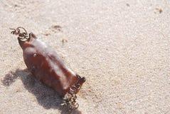 Shark egg Royalty Free Stock Images
