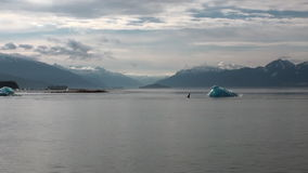 Shark fin on calm water of Pacific Ocean on background iceberg in Alaska. stock video footage