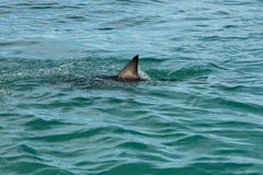Shark fin Stock Images