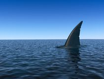 Shark fin over sea water surface Stock Image