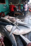 SHARK FIN. Sold with the price of IDR 700 thousand or down from the price of IDR 1.8 million in 2010 after the ban hunting these fish Stock Image