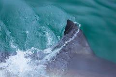 Shark fin Stock Image
