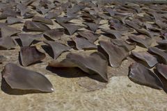 Free Shark Fins Stock Photography - 40741112