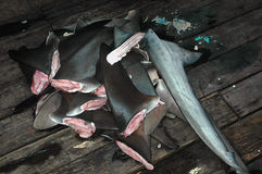 Shark fins Royalty Free Stock Image