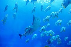 Shark and fish stock images