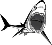 Shark fish head. Symbol for mascot or emblem design, logo vector illustration for t-shirt. Sketch tattoo design Royalty Free Stock Image