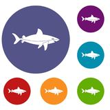 Shark fish icons set. In flat circle red, blue and green color for web Royalty Free Stock Photos