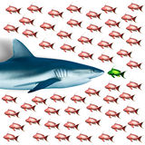 Shark and fish, red Sea, Egypt. Shark and fish on white backround, red Sea, Egypt Royalty Free Stock Images