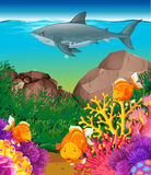 Shark and fish swimming in the sea Stock Image