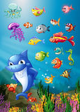 Shark and fish swimming under the sea Royalty Free Stock Image