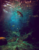 Shark and fishes in aquarium Stock Photography