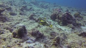 Shark and fishes underwater stock footage