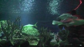 Shark floating stock video
