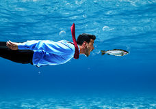 Shark. Funny business man swimming underwater royalty free stock image