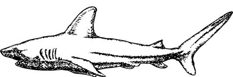 Shark Hand drawn sketching Stock Photos