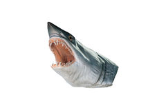 Shark head model isolated on white background  with clipping pat Stock Photos