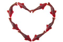 Shark heart Royalty Free Stock Images
