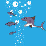 Shark hunt for fish. The water bubbles Stock Photos