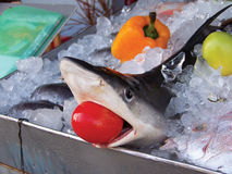 Shark in ice. With tomato inside the mouth Royalty Free Stock Image