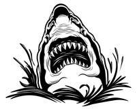 Free Shark Illustration Royalty Free Stock Image - 160446366