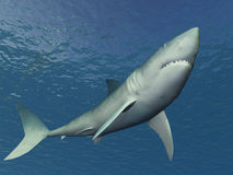 Shark Illustration. 3D Shark Illustration under the sea Royalty Free Stock Image