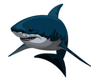 Shark, illustration. Shark, Blue and Gray, vector illustration Stock Photography