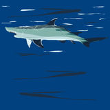 Shark, illustration Stock Images