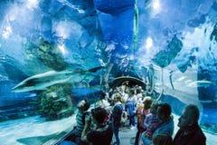 Shark In Aquarium - Tropicarium, Budapest Royalty Free Stock Photo