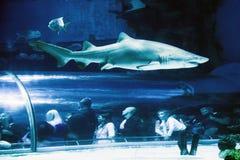 Shark In Aquarium - Tropicarium, Budapest Stock Photos