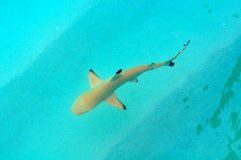 Shark in the Indian ocean Stock Photo