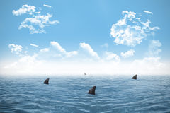 Shark infested sea under blue sky Royalty Free Stock Photos