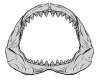 Shark Jaw. Isolated on white Stock Photo