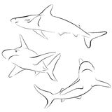 Shark line style. Vector symbol Royalty Free Stock Image