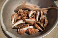 A Shark and Live Gastropods for Sale on Koh Rong Island, Cambodia. A small shark and live gastropods for sale for food on a Cambodian island Stock Image