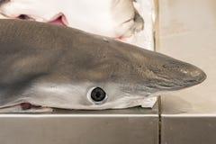 Shark on local market fishmonger Royalty Free Stock Image