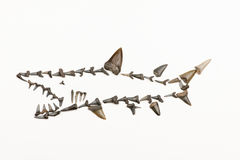 Shark made ​​from fossil shark teeth Stock Image